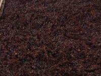 getrockneter-Pinot-Noir